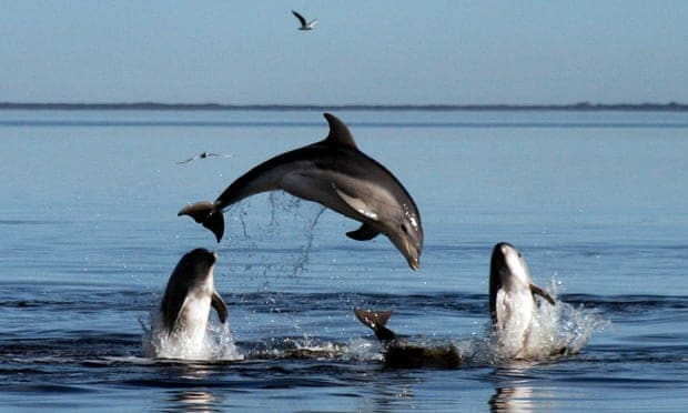 New Zealand bans swimming with bottlenose dolphins after numbers plunge