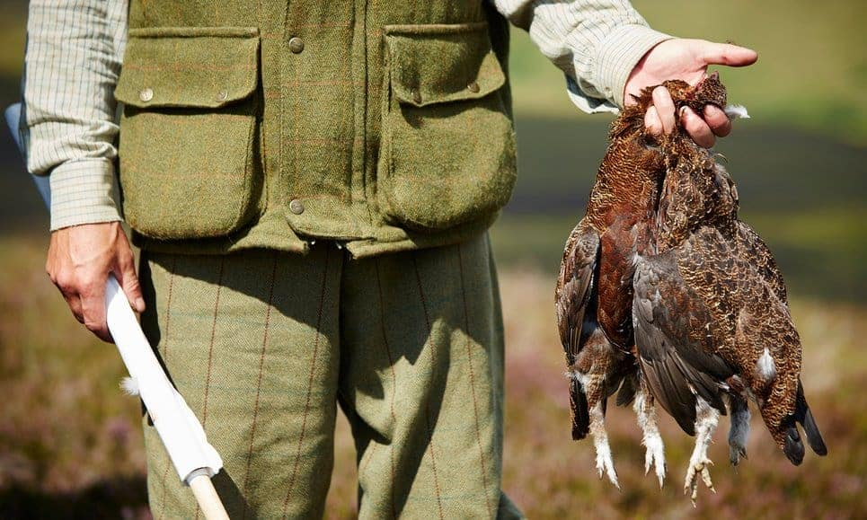 POLL: Should there be a ban on driven grouse shooting?