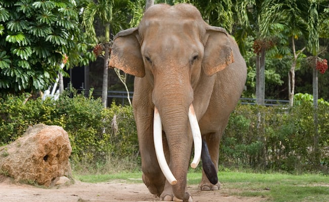 POLL: Should the keeping of elephants in captivity be banned?