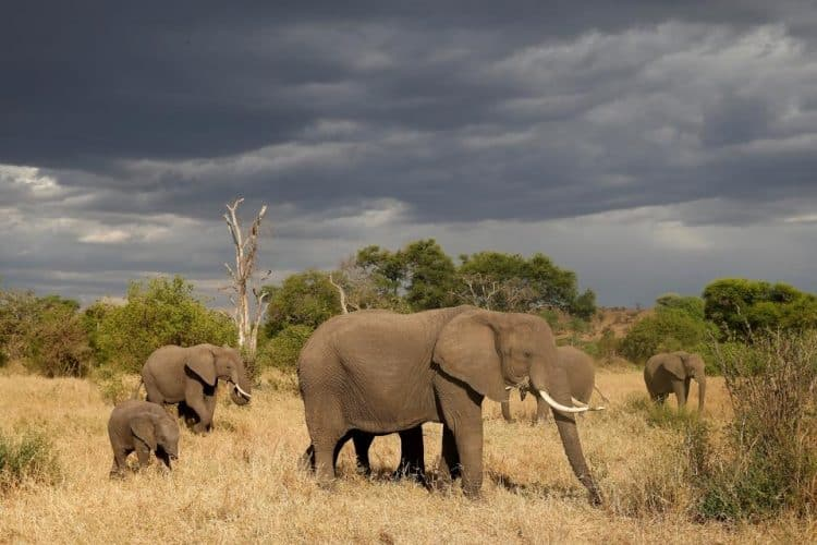 Tanzania to shut part of wildlife preserve to big game hunters