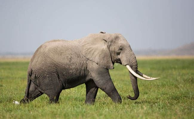Nearly 90 Elephants Found Poached in Botswana