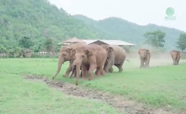 Elephants Can't Wait to Meet New Rescued Baby at Sanctuary