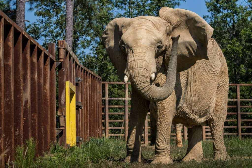 POLL: Should elephants be kept in captivity?