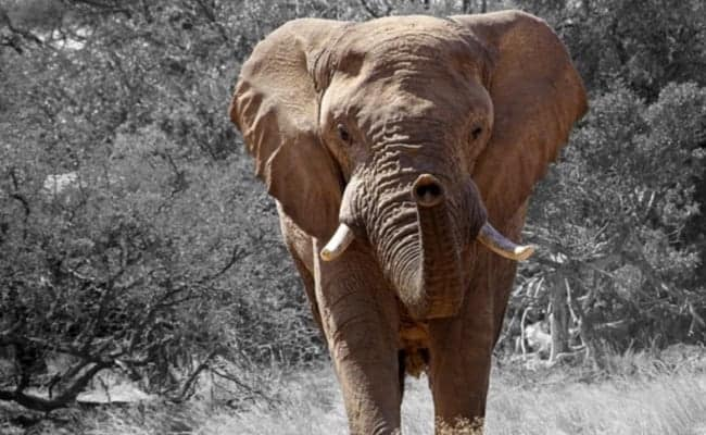 Karma? Another Trophy Hunter Has Been Killed by an Elephant