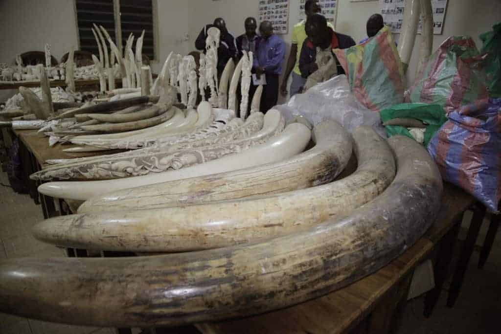 POLL: Should Yahoo be sanctioned for aiding the slaughter of elephants?