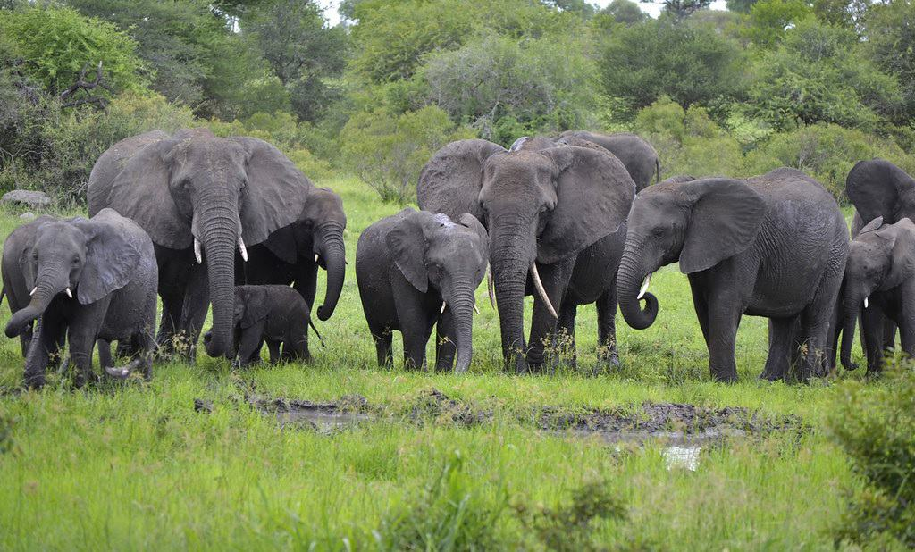 More than 50 elephants starve to death in Zimbabwe drought