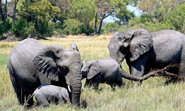 Botswana condemned for lifting ban on hunting elephants