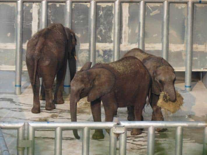 Photos Show Sad Plight for African Elephants Lifted to China