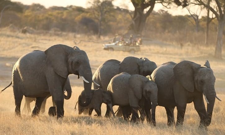 Another 22 elephants poisoned with cyanide in Zimbabwe reserve