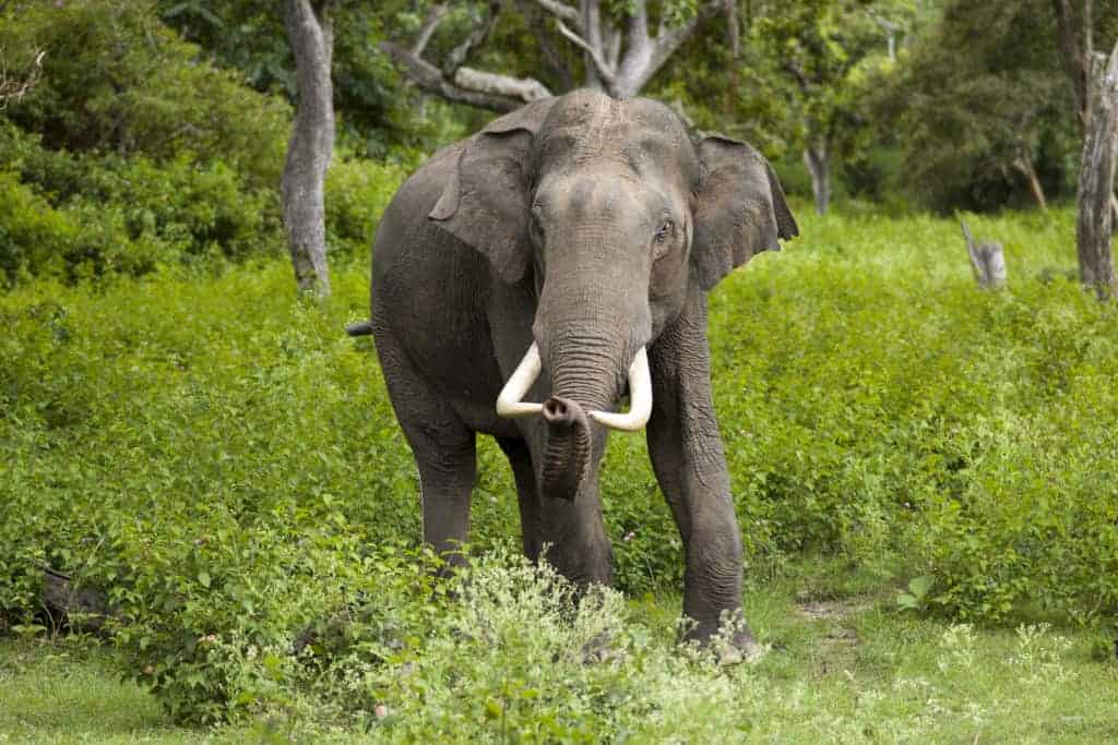 How do you stop wild elephant attacks? In India, it's with text messages