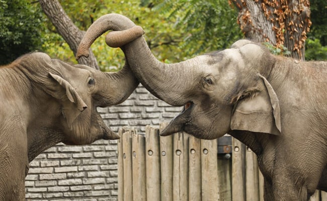 Victory! Buffalo Zoo is Closing its Elephant Exhibit