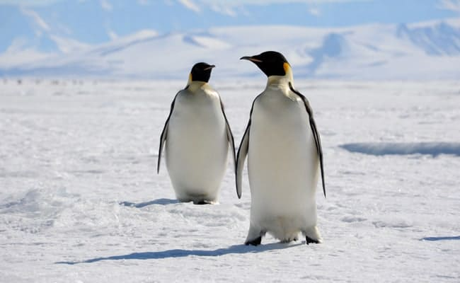 Climate change isn't going to leave Emperor Penguins anywhere to go