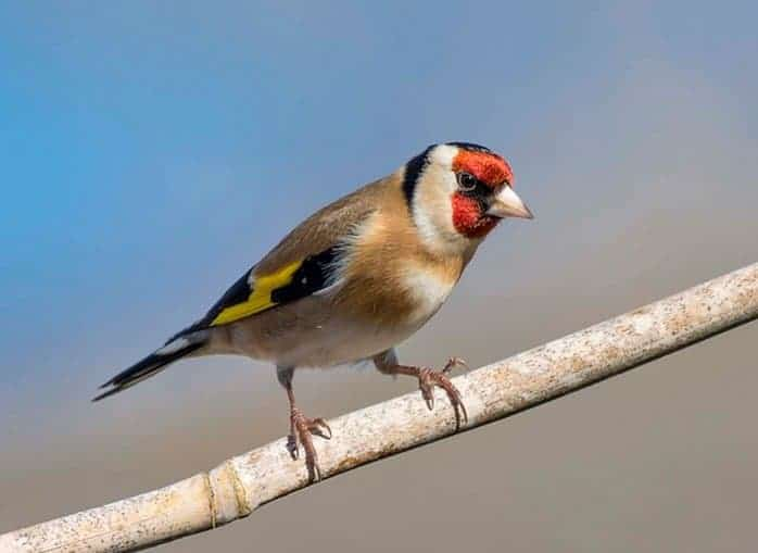 POLL: Should the killing and trading of migratory birds be banned?