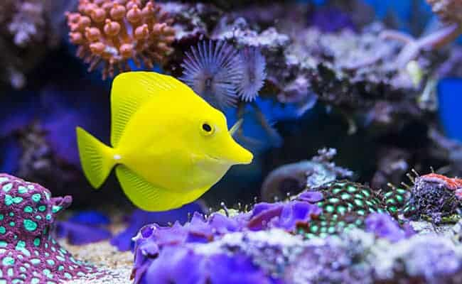 Help Protect Hawaii's Fish From the Aquarium Trade