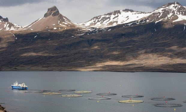 POLL: Should fish farming be forced to use closed pens to protect wild fish?