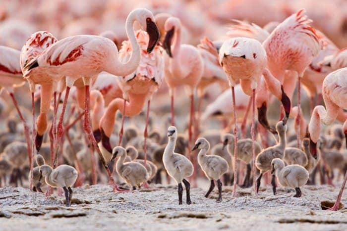 After a 10 year battle, Tanzania's 'Flamingo Factory' is safe