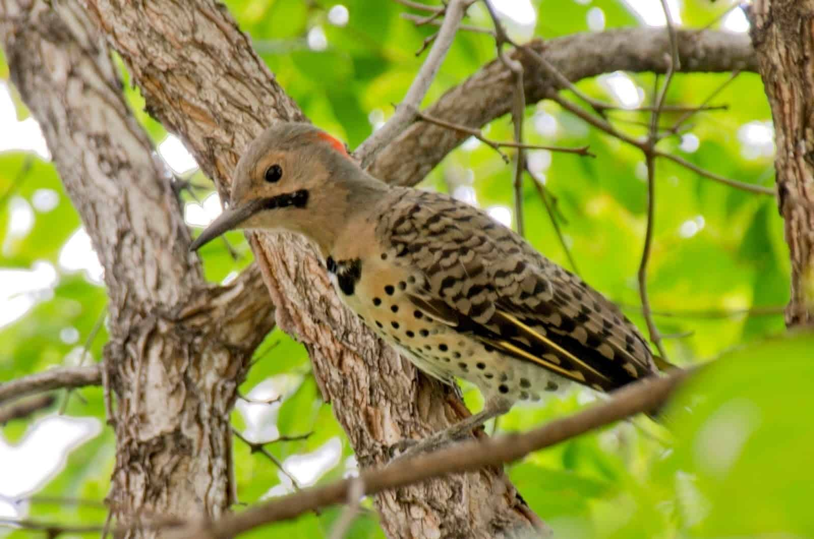 A Woodpecker Visit