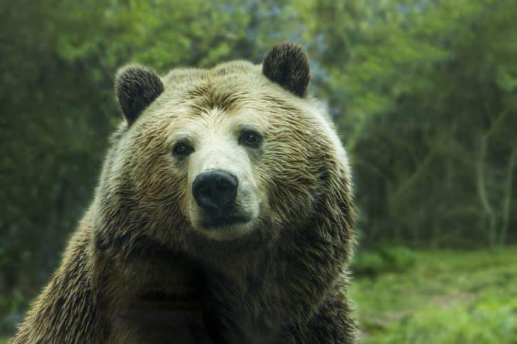 Man shoots bear, bear sends man to the hospital