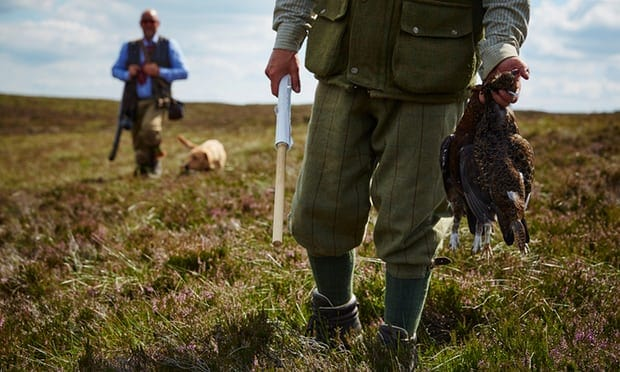 "POLL: Should the slaughter of grouse on the ""Glorious Twelfth"" be banned?"