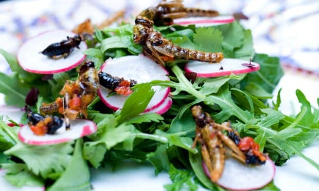 POLL:  Would you eat insects to save the planet from global warming?