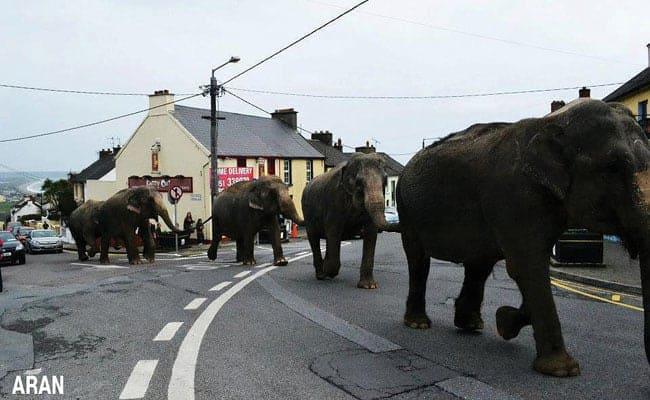 Success! Ireland Bans Wild Animals in Circuses