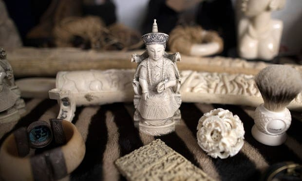 Pressure grows for UK to bring in blanket ban on ivory trade