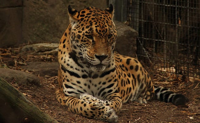POLL: Should we continue to keep wildlife in captivity?