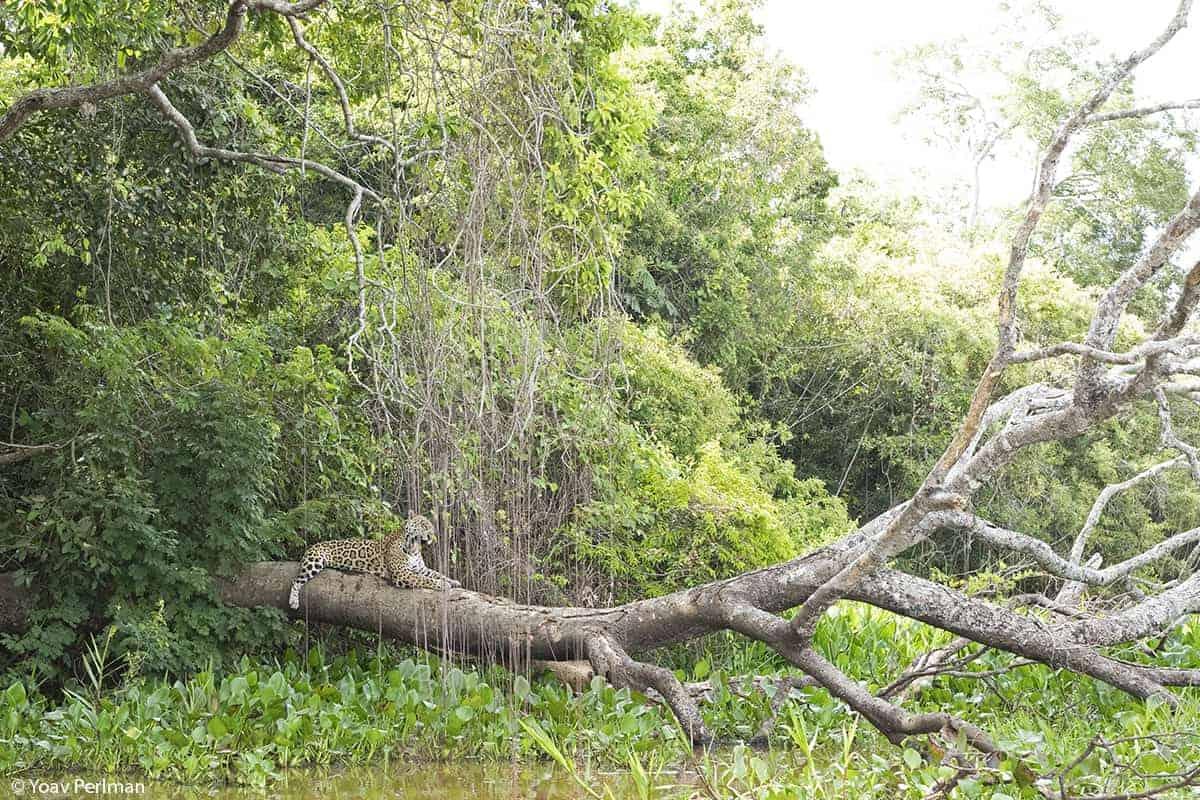 Brazil Pantanal day #1
