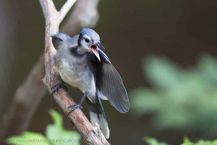 A Bird Sanctuary In Killingworth, CT Pt. IV