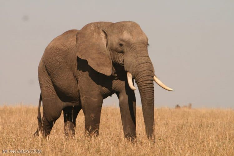 Owner of South African hunting company indicted by US prosecutors over illegal elephant hunt