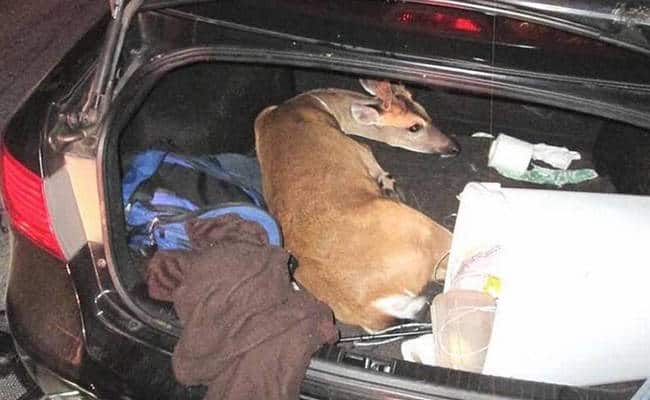 Selfie-Seeking Men Kidnap, Injure Endangered Florida Deer
