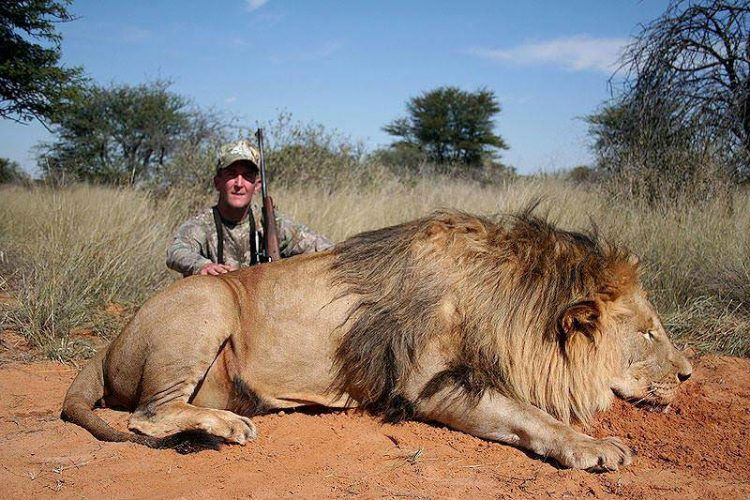 Petition: Stop Lion Canned Hunting in South Africa – Shocking Video