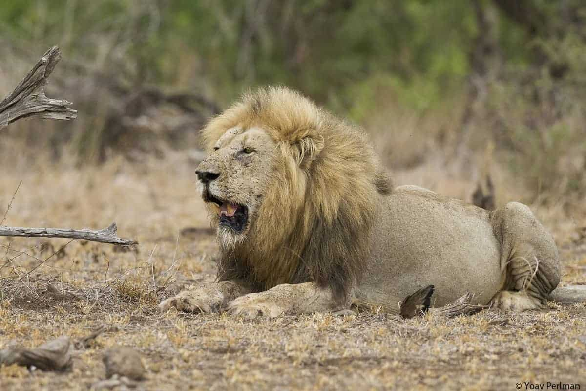 Cats and Vultures of Kruger Park