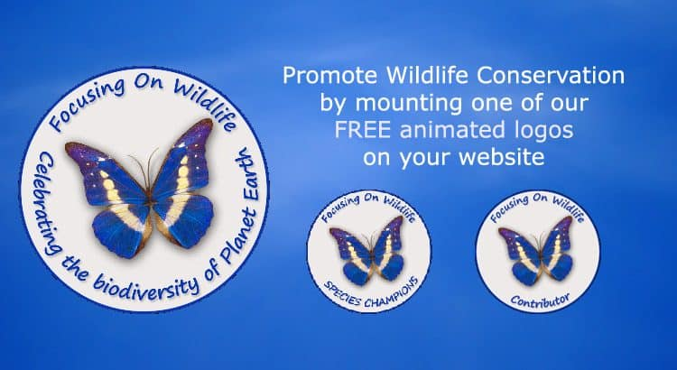 Promote Wildlife Conservation with our FREE animated logos