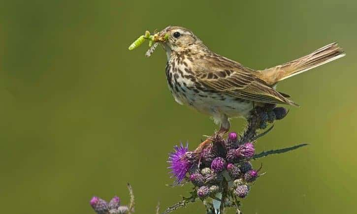 Bird species vanish from UK due to climate change and habitat loss