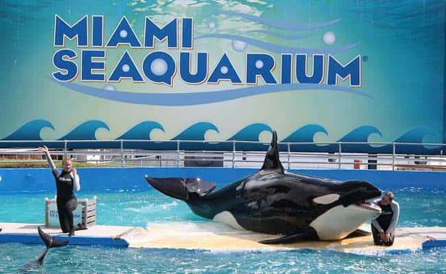 POLL: Should Orcas and Dolphins be freed from all Seaquariums?
