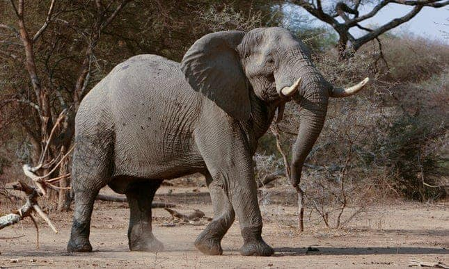 POLL: Should Mozambique's wildlife park be funded by trophy hunting?