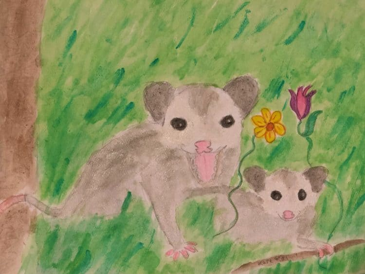 O-possums