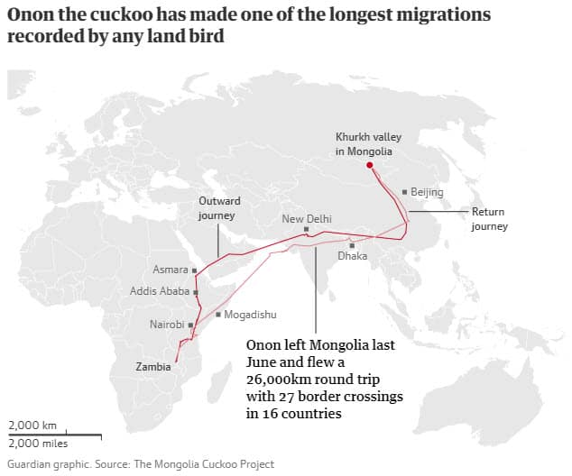 Cloud cuckoo land? How one bird's epic migration stunned scientists