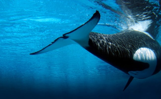 POLL: Should SeaWorld be closed down?