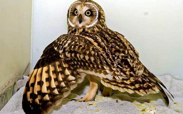 Owl airlifted to safety after crash landing on oil rig