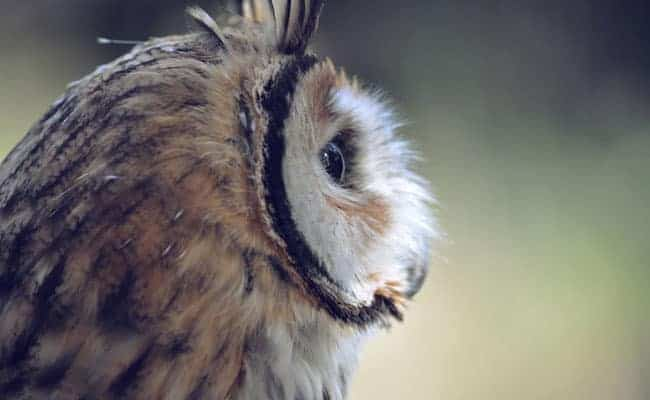POLL: Should the illegal Indonesian owl trade be closed down?