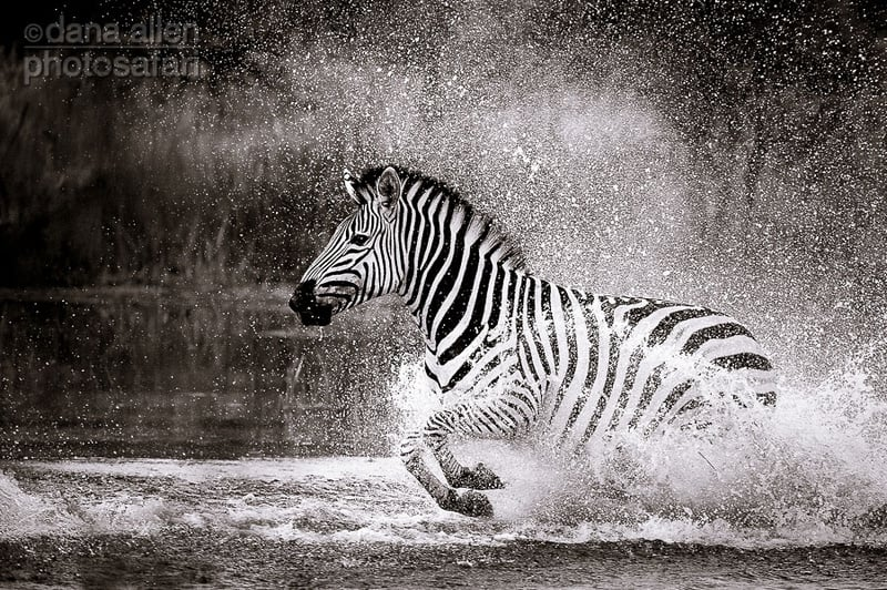 Black and White in Motion…