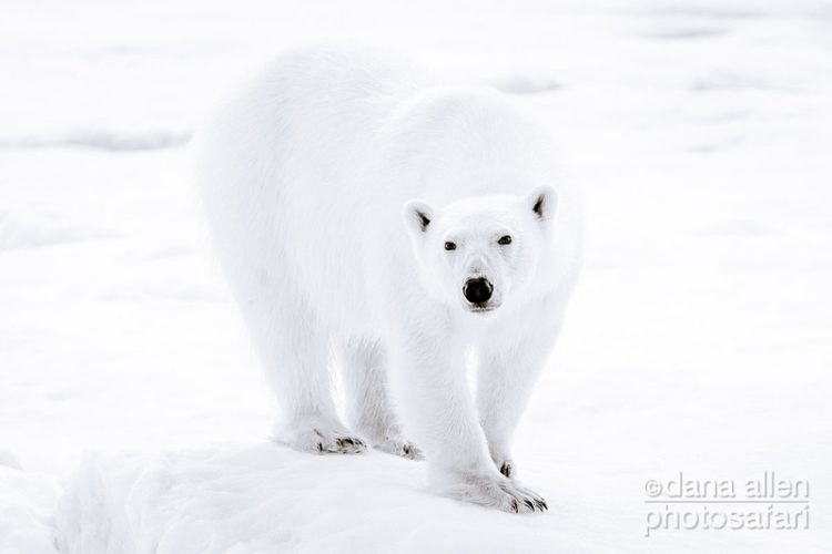 "The Only Real ""Paws"" in Global Warming"