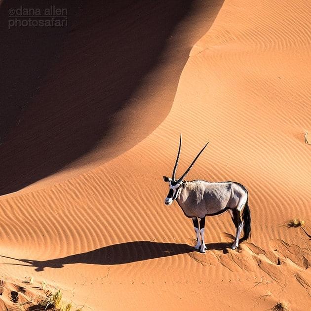 Dune…
