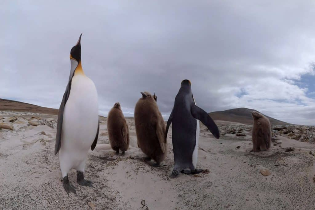 Walk with penguins in ground-breaking virtual reality video