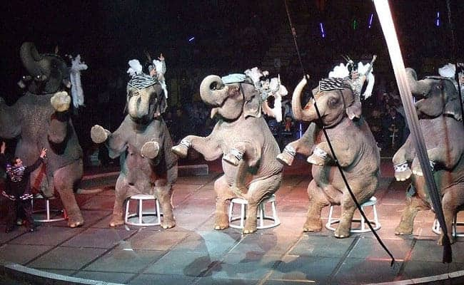 POLL: Should performing elephants in circuses be banned?