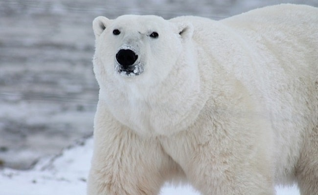 POLL: Should Arctic cruises be banned to protect wildlife?