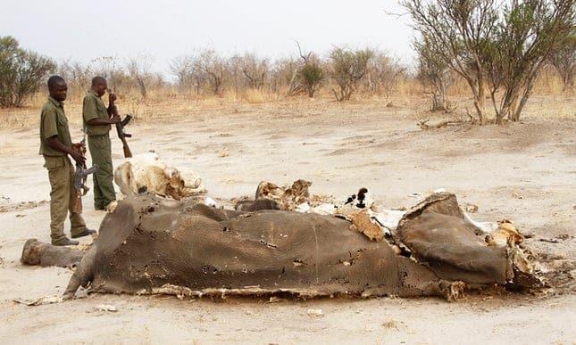 Ten more elephants poisoned by poachers in Zimbabwe
