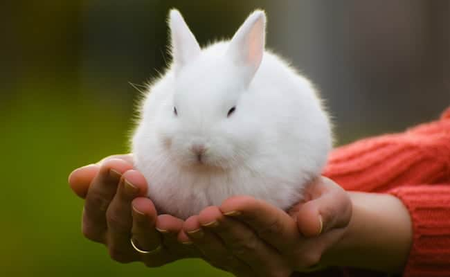 The U.S. Is a Step Closer to Banning Animal Testing for Cosmetics